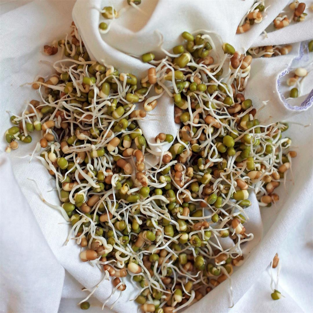 Sprouting: How to Grow, Store & Cook Beansprouts